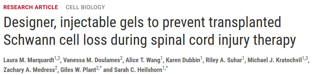 新型设计可注射高分子水凝胶材料用于防止脊髓损伤治疗过程中移植的施旺细胞流失