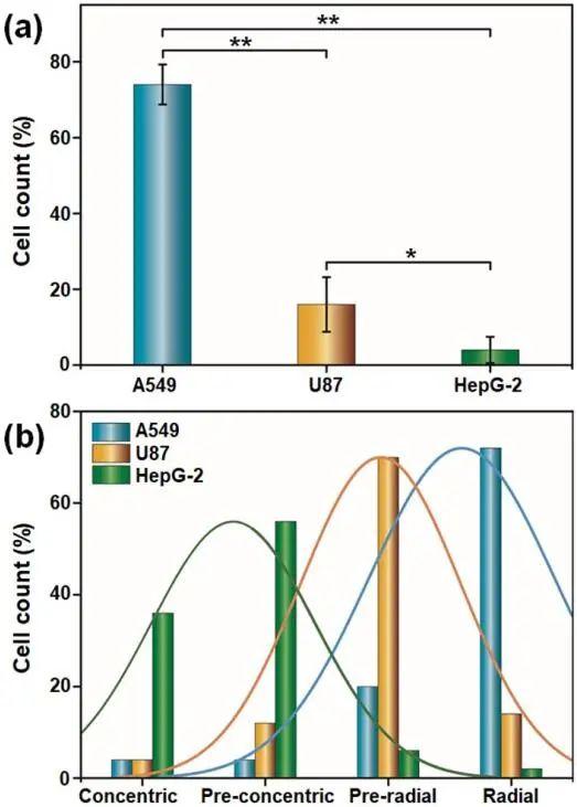 液晶弹性体微球实时监测单-活细胞释放的过氧化氢