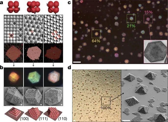 聚合物衰减库伦自组装,使胶体也可结晶