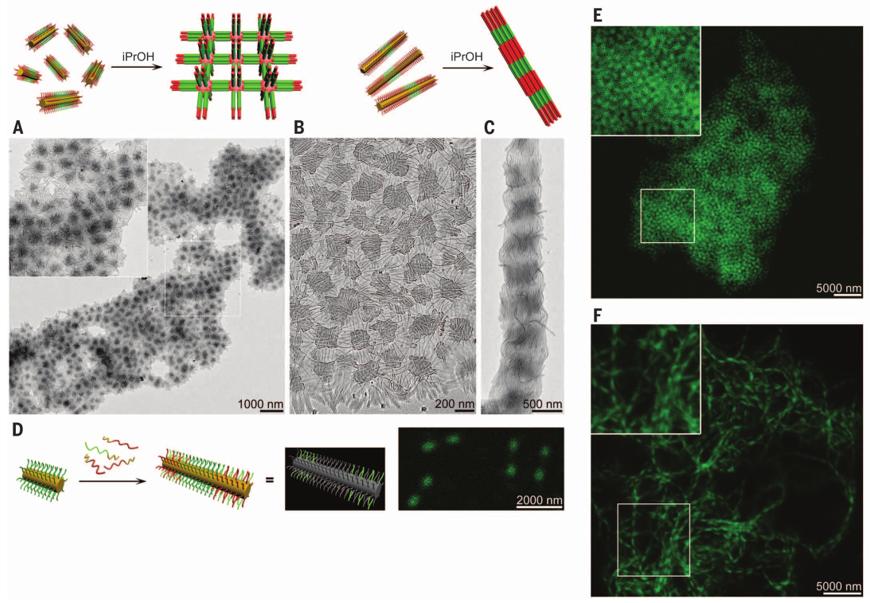 1個體系做瞭十餘年,磨出5篇《Science》!這些膠束形貌美到令人窒息!