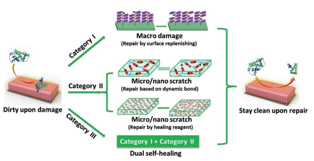 自修复防污材料的最新研究进展