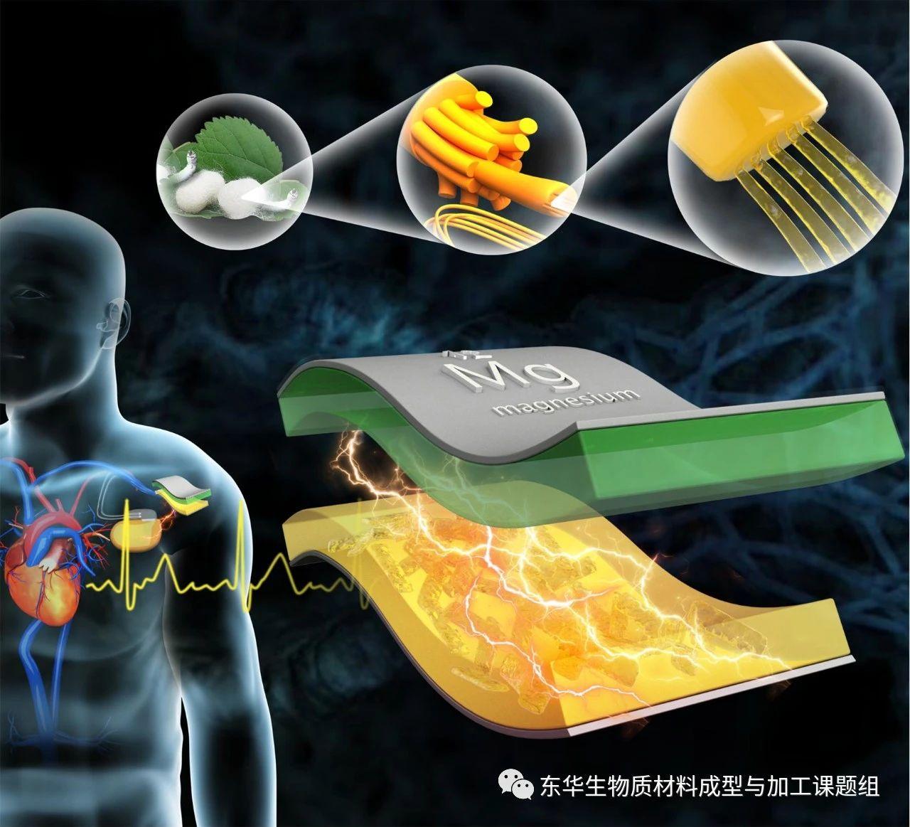 納米絲帶構築脈搏驅動的生物納米摩擦發電機