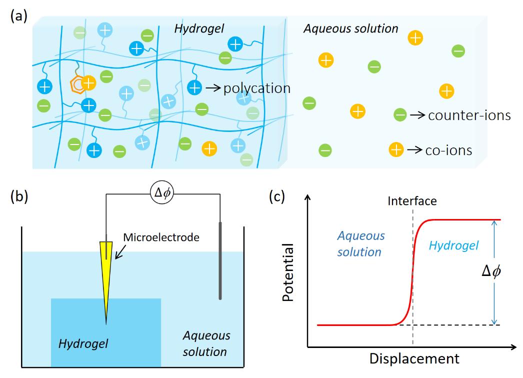 北海道大學龔劍萍團隊《Giant》:聚陽離子-π水凝膠中不同陽離子對苯環的競爭作用