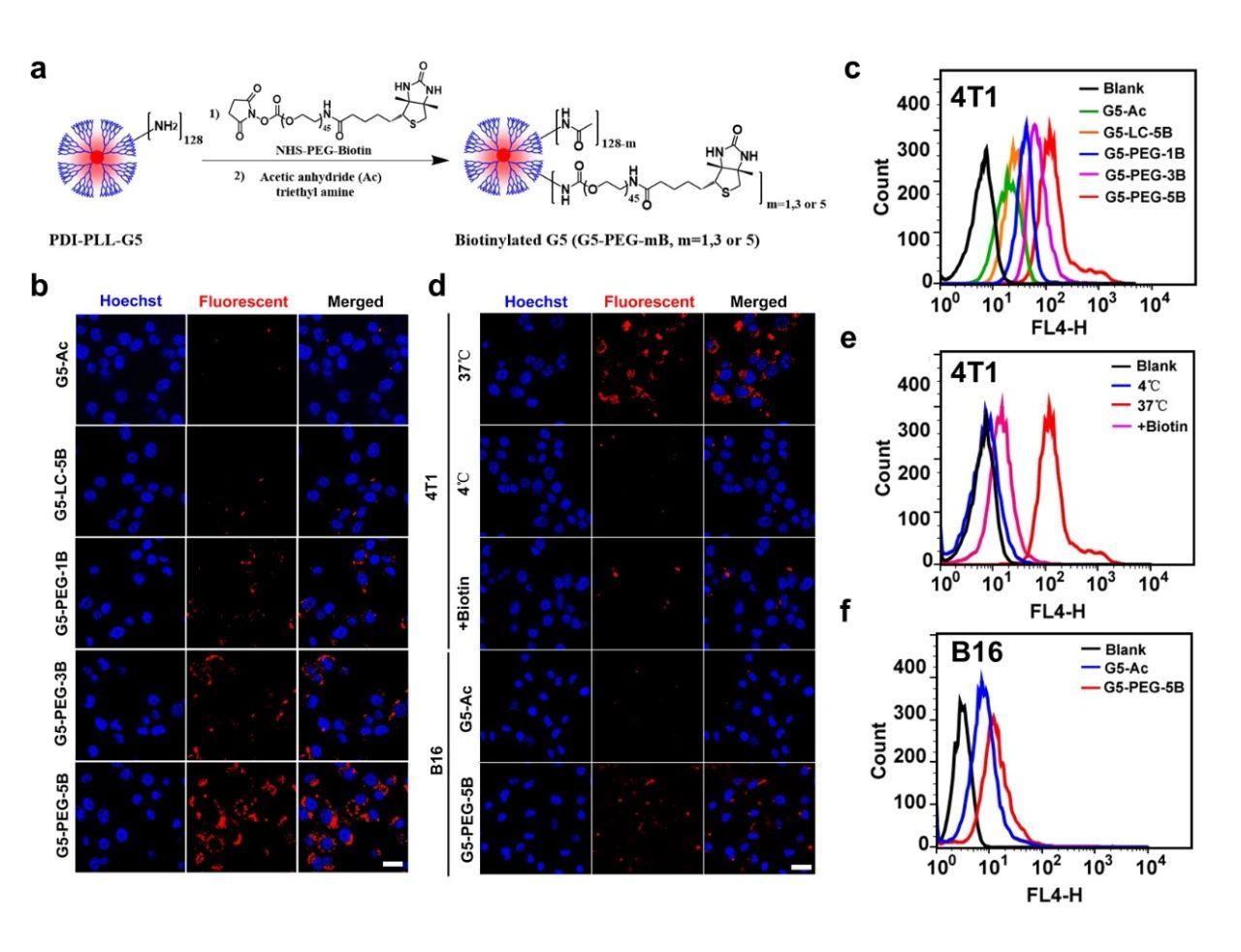 單分子有機熒光納米點在腫瘤成像與手術導航中的潛在應用