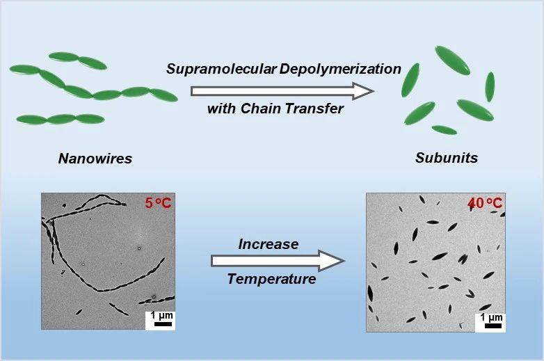 華東理工林嘉平教授團隊在多級納米線的超分子解聚取得新進展