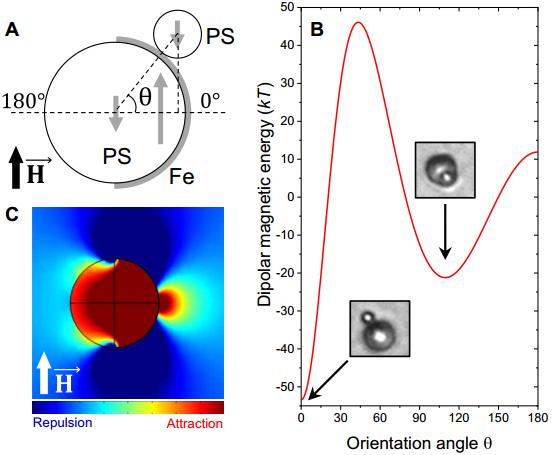 磁场驱动的多组分超粒子的组装和重构