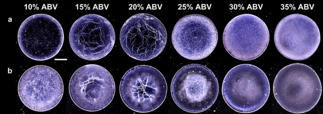 一杯咖啡,一篇Nature,一滴威士忌,一篇ACS Nano,生活处处有科学