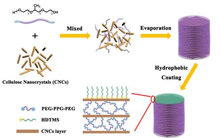 上海交通大学王新灵教授《ACS AMI》:有机溶剂可致变色的表面疏水纤维素纳米晶薄膜
