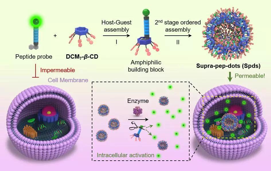 华理贺晓鹏团队:在非抗生素型抗菌材料、抗菌肽微球领域取得重要进展