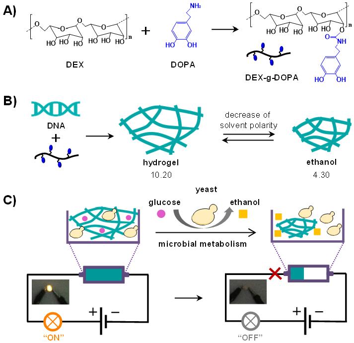 釀酒酵母發酵過程控制DNA水凝膠導線電路開關