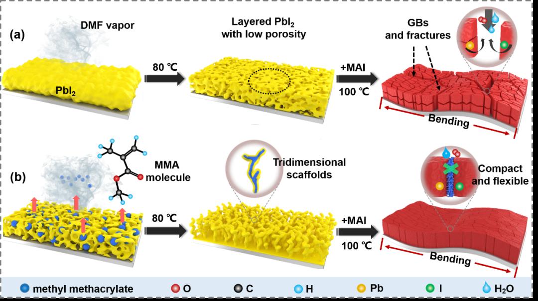 南昌大学陈义旺和谈利承教授构建自主纵向有机支架控制钙钛矿晶粒生长和稳定性