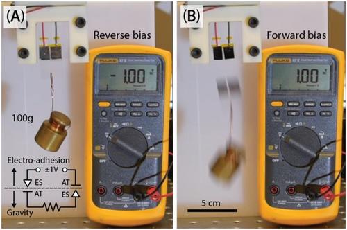 《Science》之后再发《AM》:粘附材料新体系——离子弹性体结的低压可逆电粘附!
