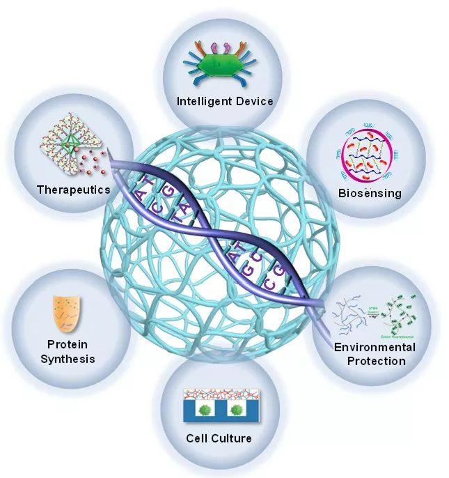 天津大学仰大勇课题组发表DNA高分子水凝胶研究系统评述