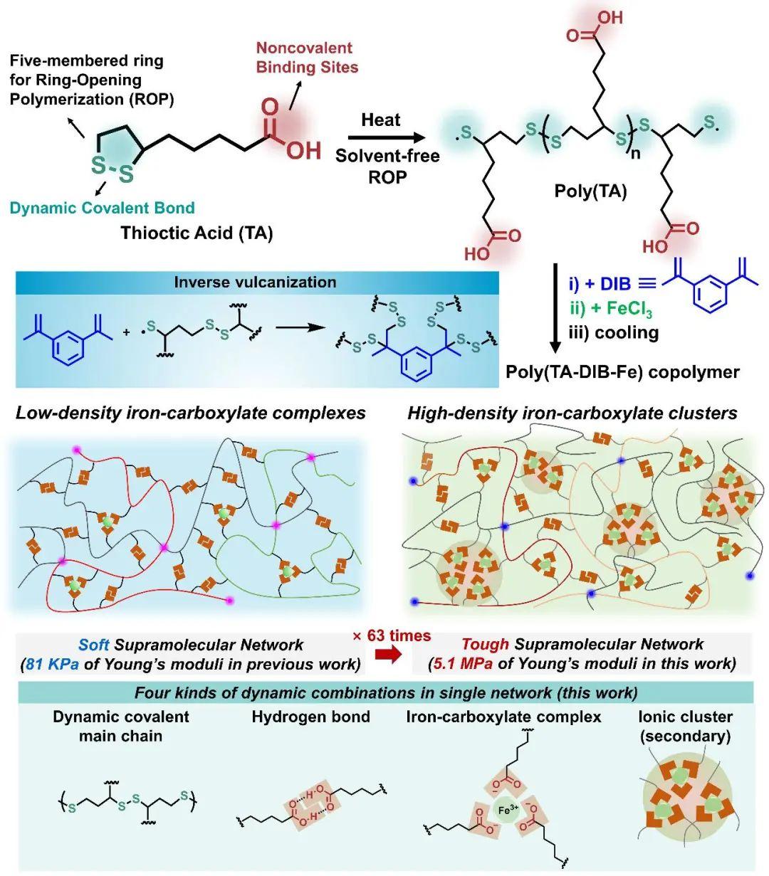 华东理工大学曲大辉《德国应化》:在超分子自修复聚合物领域研究工作取得进展