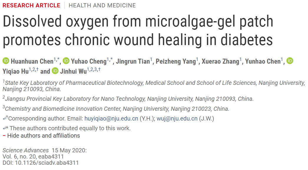 糖尿病患者的福音:南京大学开发出治疗慢性伤口的微藻凝胶贴片