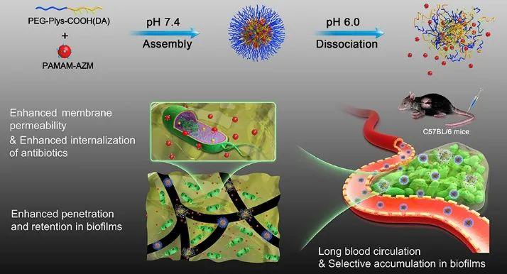 """浙江大学计剑、金桥研究团队在""""利用""""和""""改造""""微环境抗细菌生物被膜上取得系列进展"""