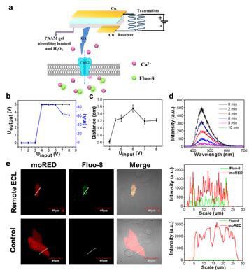 无线充电电化学发光水凝胶---远程激活光敏感蛋白的新光源