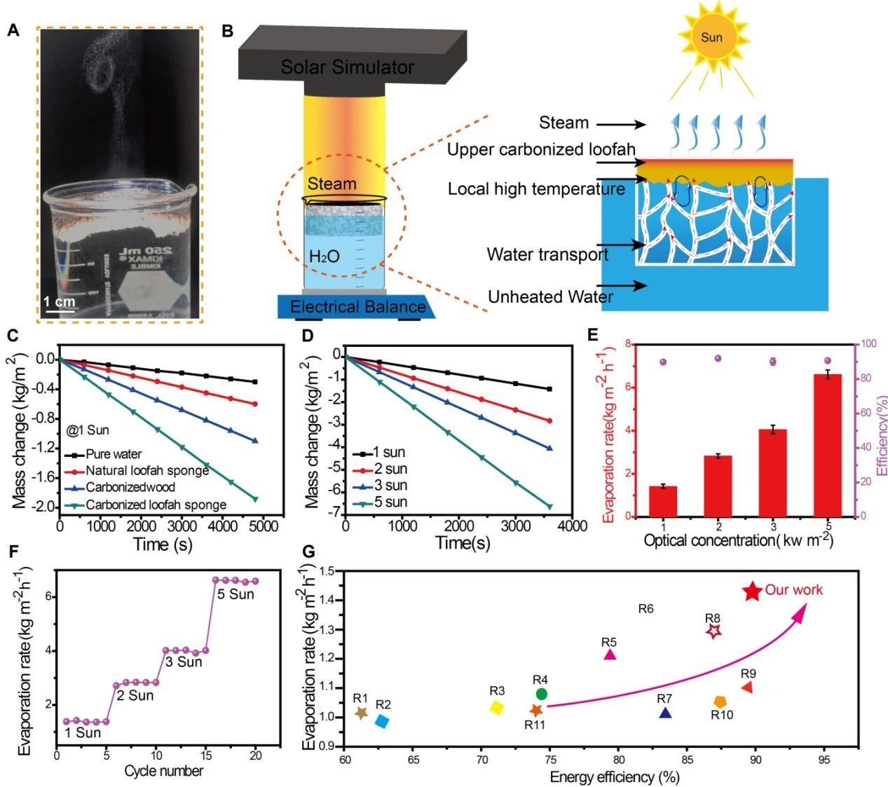 美国东北大学祝红丽教授团队《JMCA》:耐用、抗污的多孔丝瓜络用于高效太阳能淡化海水