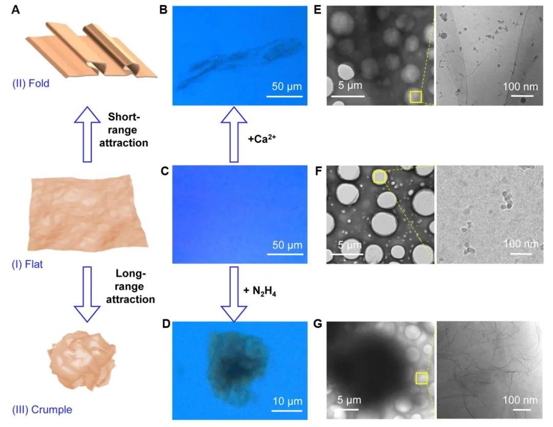 浙江大學許震、高超與清華大學徐志平合作《Matter》:單層氧化石墨烯模型闡明二維大分子溶液構象之謎