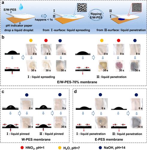 """江雷院士/田東亮《ACS Nano》:高度柔性的單層多孔膜,讓你告別夏天""""粘糊糊""""的不快之感"""