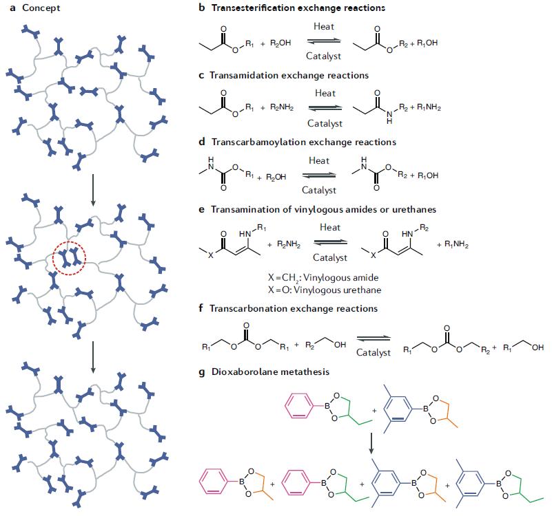 《自然綜述·材料》:自修復高分子,能夠像生命體新陳代謝似的自修復嗎?