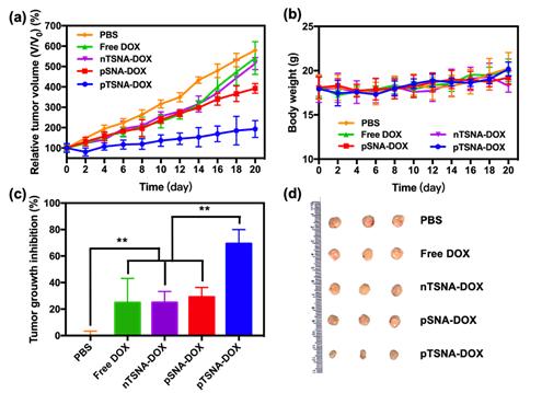 浙江大學計劍教授研究團隊開發用於腫瘤滲透加強與藥物靶向傳遞的雙響應動態解組裝納米載體