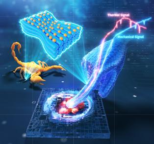 華中科技大學史玉升教授團隊《Adv.Sci.》封底文章: 4D打印仿蠍子縫結構,實現傳感-執行一體化