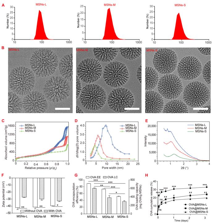 四川大学孙逊/张凌《Sci.Adv.》:纳米粒子孔径调节为免疫激活和癌症治疗提供新思路