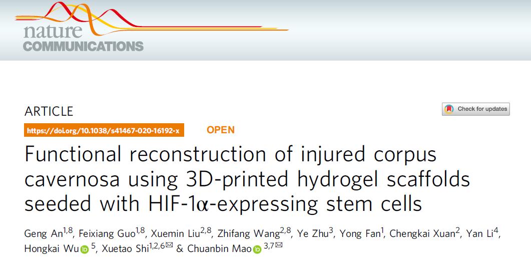 華南理工大學研發出3D打印水凝膠支架實現海綿體修復,成功恢復雄兔生殖能力!