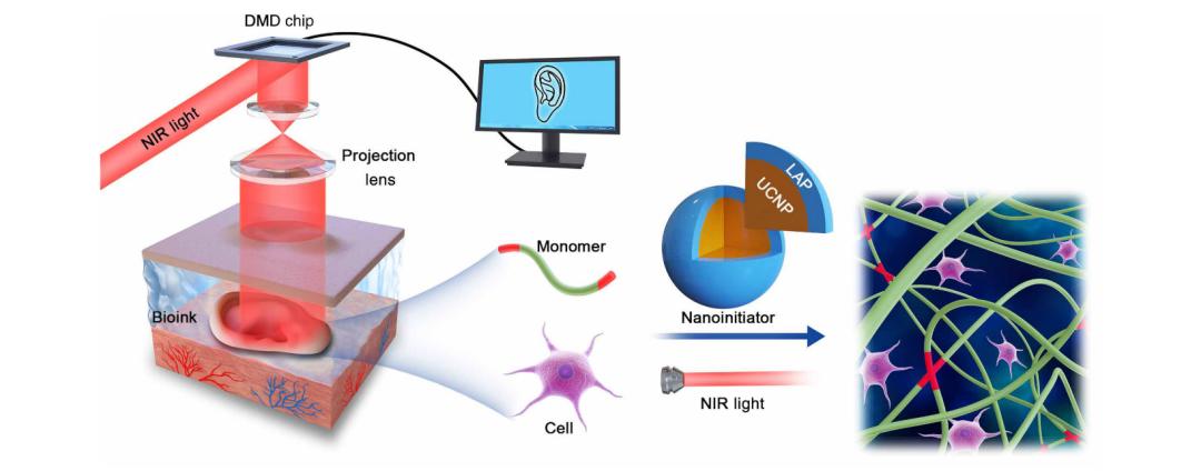 四川大學《Science》子刊:直接在體內進行無創3D打印!