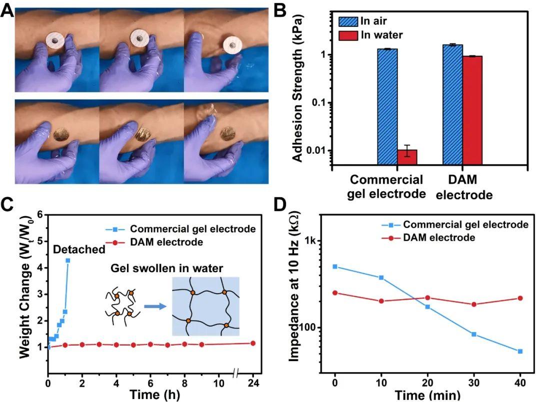 新加坡南洋理工大學陳曉東教授課題組:防水可拉伸皮膚電極