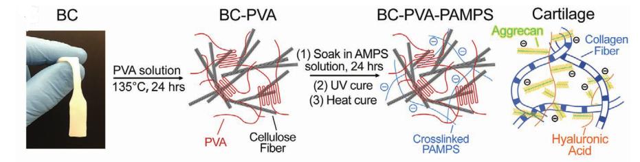 双网络水凝胶再登《AM》,能耐10万次拉伸测试,首例性能与软骨相当的水凝胶材料