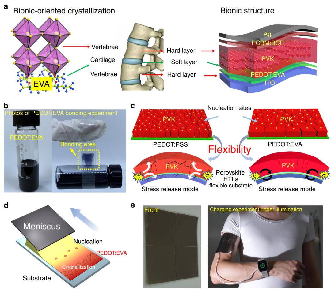 陈义旺、胡笑添团队《自然-通讯》:仿生脊柱设计助力大面积柔性钙钛矿太阳电池