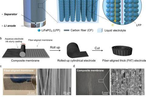 垂直取向的碳纤维框架助力低曲折度、高导电性和高面积容量的电池正极