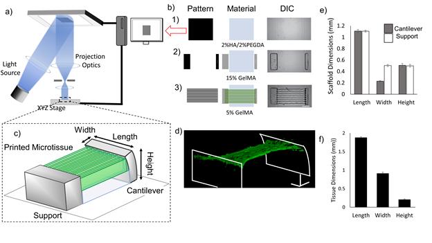 《Biomaterials》:3D打印心脏微组织-模拟心肌纤维结构