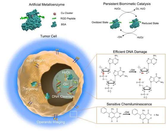 原位动态观测肿瘤治疗效果的新方法
