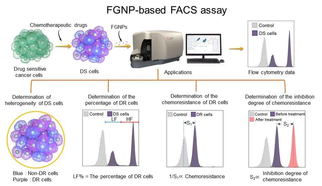 上海交大窦红静教授团队开发了一种基于多糖荧光纳米颗粒的肿瘤化疗耐药性诊断方法