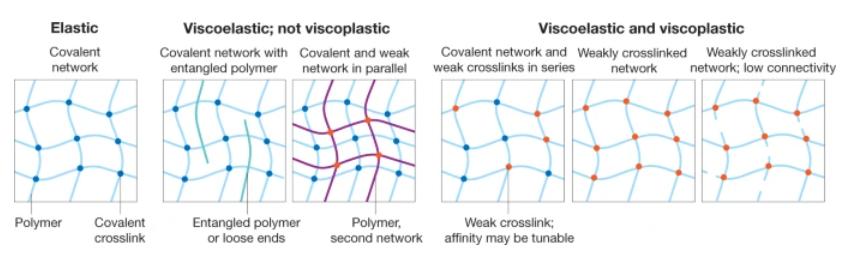 《Nature》重磅综述:生物医用材料设计指导性文件!细胞外基质粘弹性对细胞行为的影响