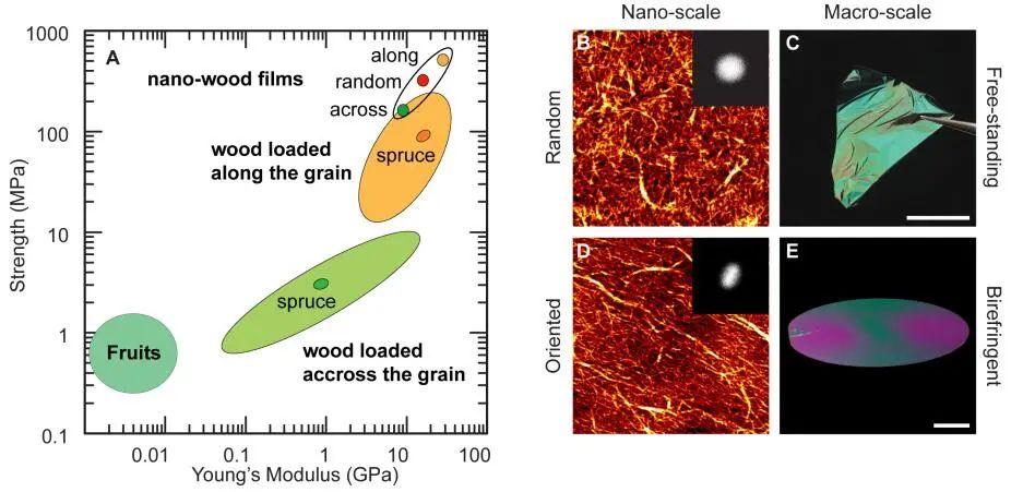 《ACS Nano》取之于木胜于木!纳米纤维素薄膜强度超越木材
