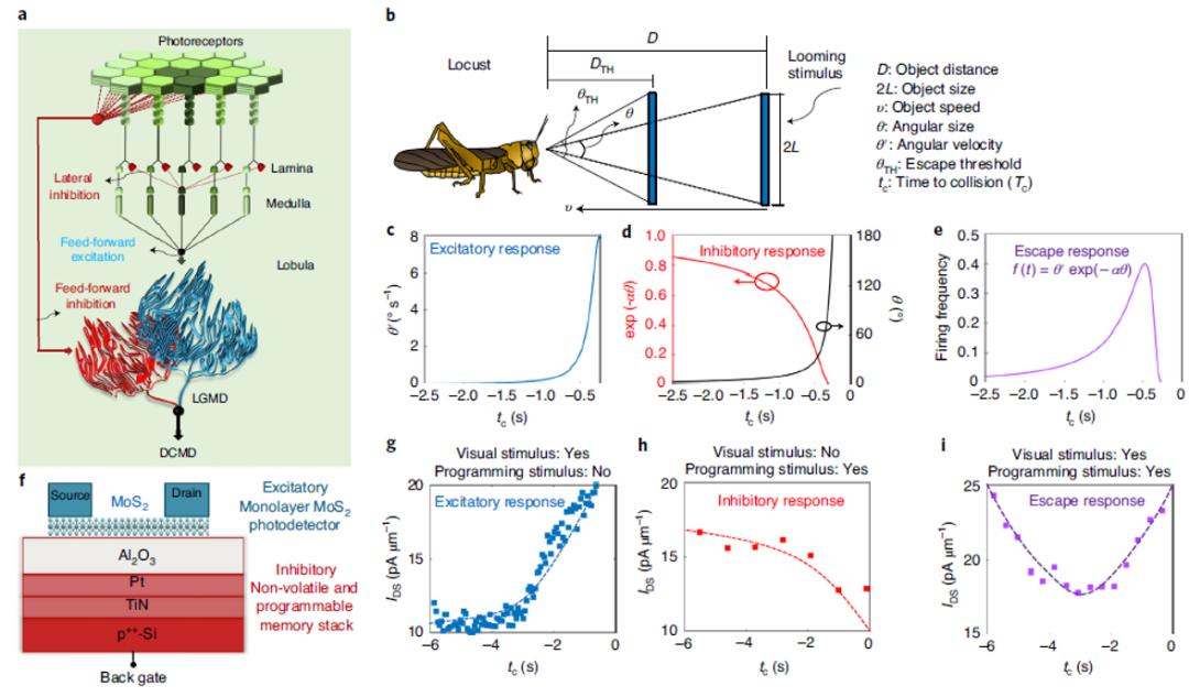 """成群的蝗虫如何避免""""撞车""""?师法自然,科学家开发出仿生无人驾驶防撞探测器"""