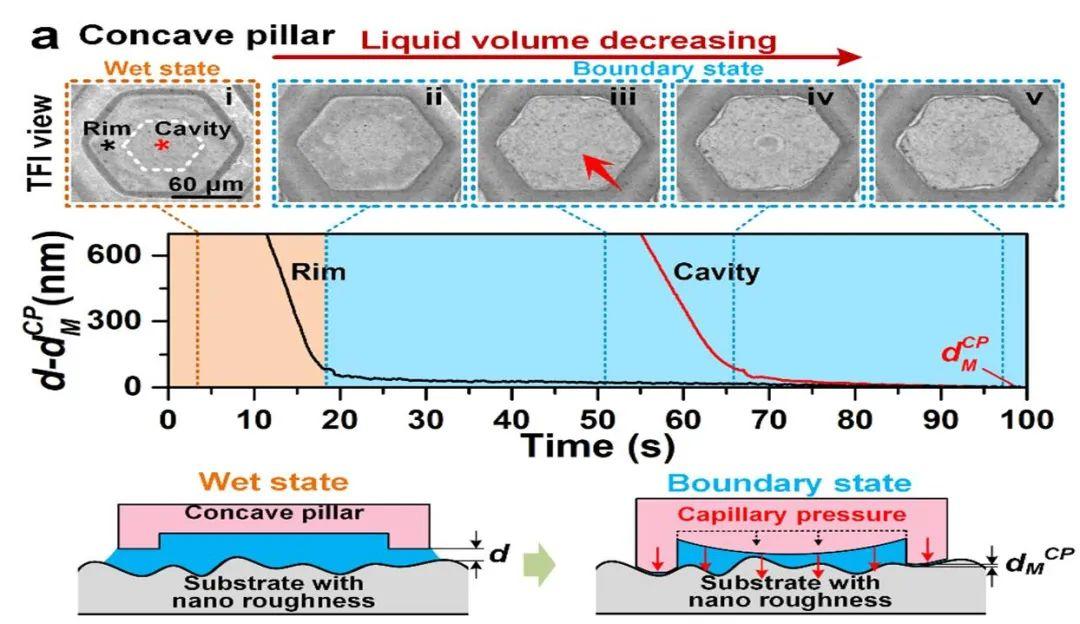 北航陈华伟教授:树蛙脚掌的多级微纳界面湿增摩效应规律研究