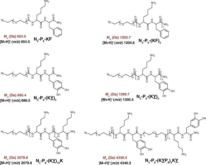《自然·通讯》:追寻本质!探究Lys-DOPA湿粘合剂的分子设计原理