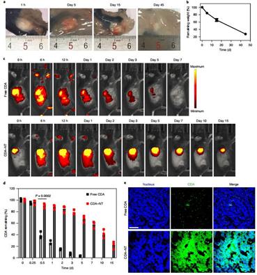 约翰霍普金斯大学崔宏刚《Nature》子刊:包含STING和CPT的原位自组装水凝胶实现100%抑制肿瘤生长