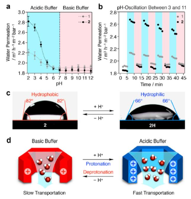 任詠华院士团队《JACS》:首个二维超分子智能聚合物