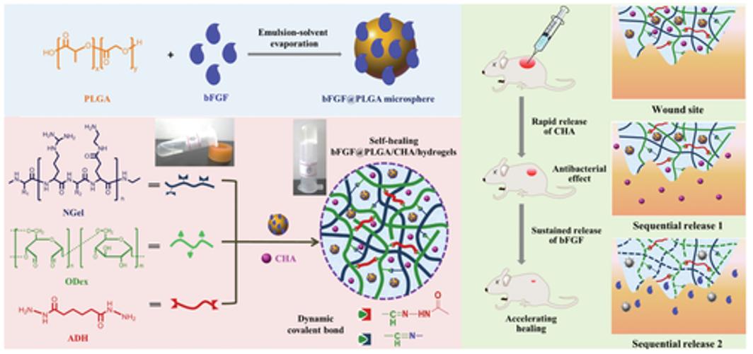生物医学水凝胶怎么选?《AFM》综述解答:先进的纳米/水凝胶在生物医学中的潜在应用:静态,动态,多级和生物启发