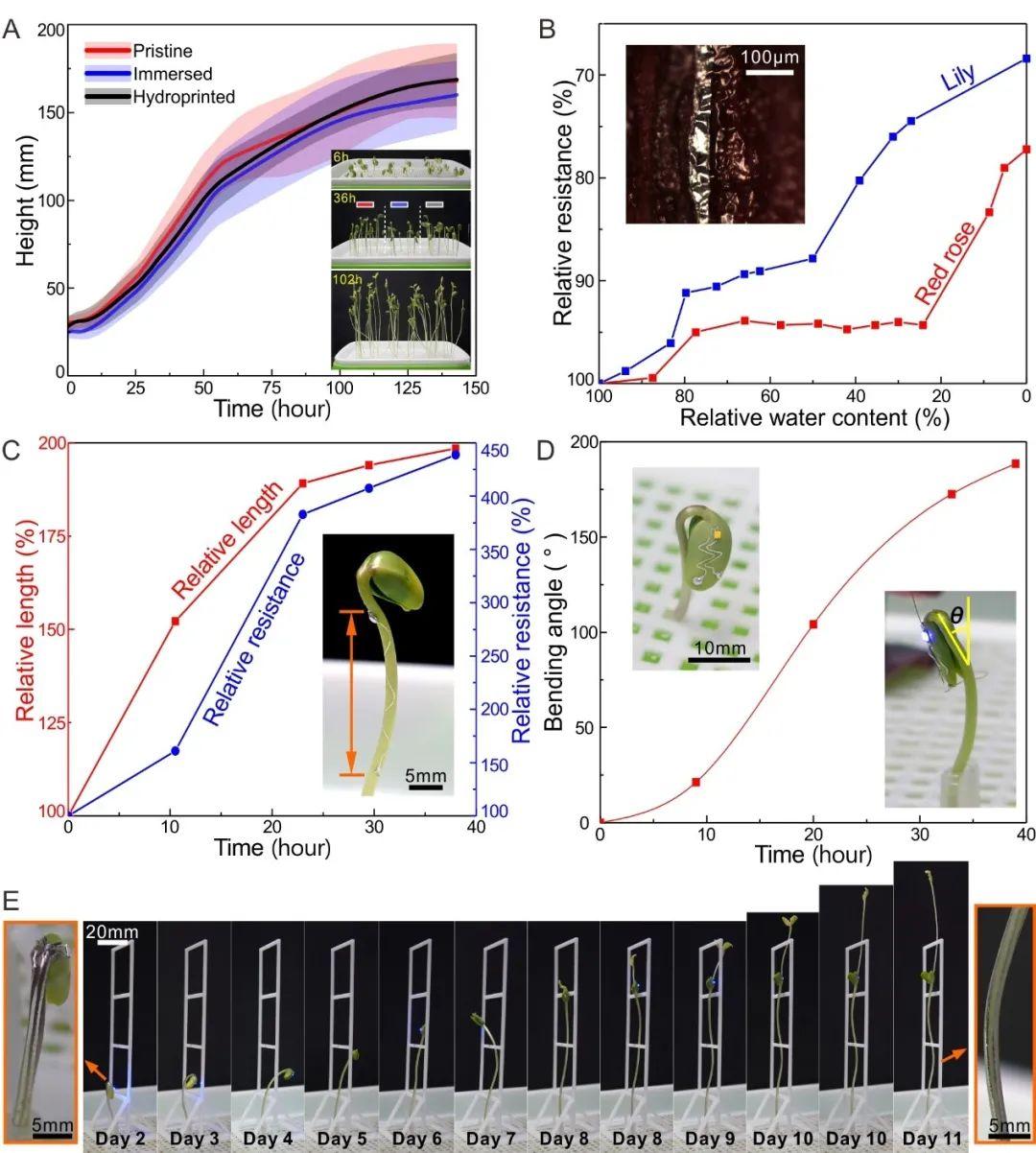 华中科技大学丁汉院士/吴志刚教授《Small》:可用于植物检测和生长操控的液态金属水转印