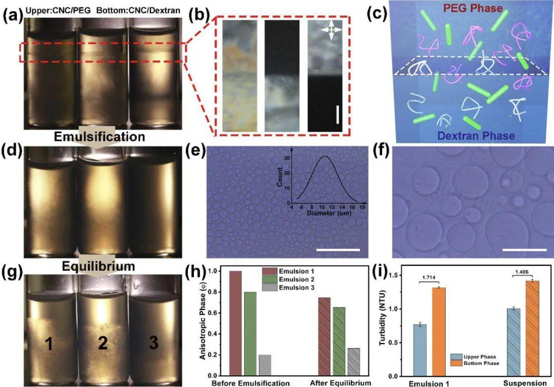 《ACS Nano》:具有可渗透界面组装的纳米纤维素基水包水液晶乳液