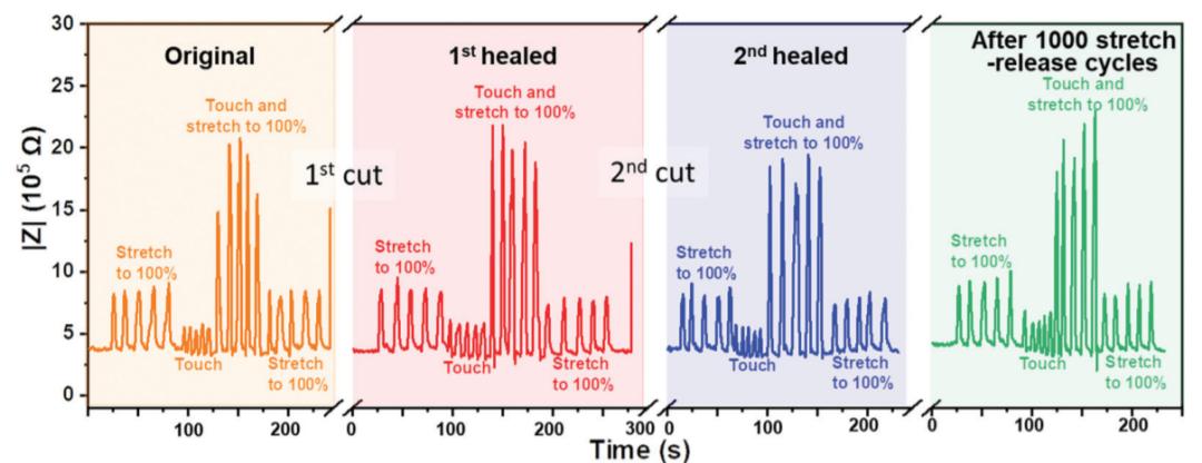 不依赖于压力的触摸传感器!吉林大学刘小孔教授《Mater. Horiz.》:可自修复的纯固态、无液体、可拉伸、高弹性离子导体