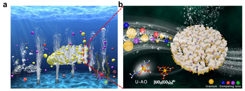 中科院上海应物所《JMCA》:海水提铀取得新进展!