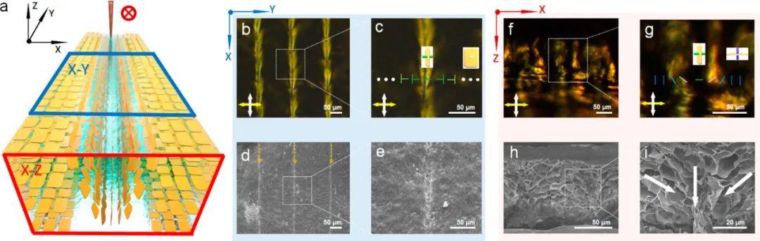浙江大学高超、许震团队《ACS Nano》:在剪切微印刷术研究方面再获进展